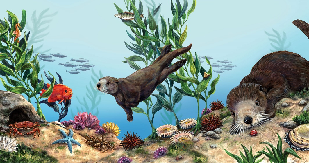 linda bittner sea otter illustrations