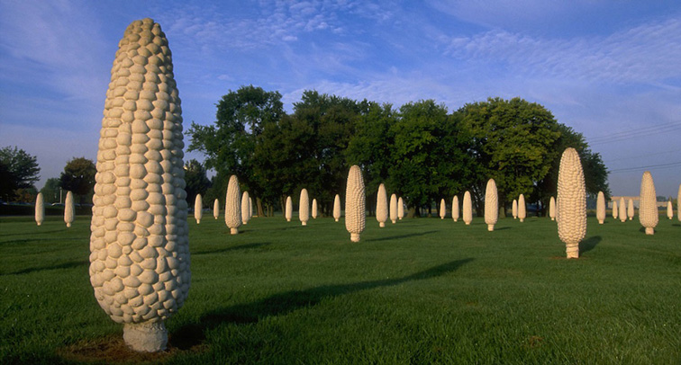 Master of Fine Arts, imgae of green field of giant yellow corn cobs, with blue sky and green trees in the background