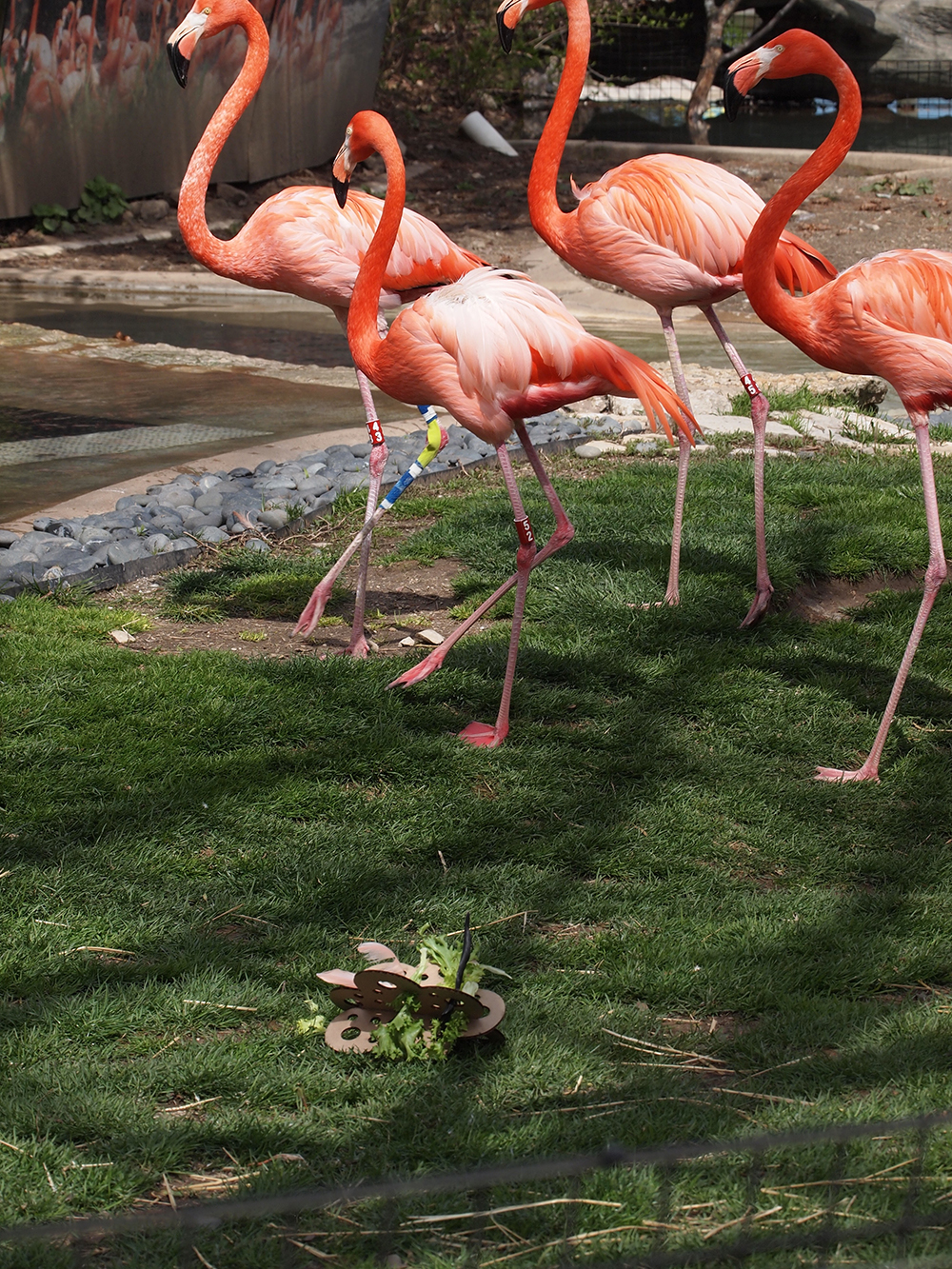 Animation, Flamingos mill about in an enclosure, some appear to be injured and have bandages wrapped around their legs